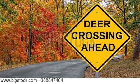 Deer Crossing Caution Sign - Autumn Background