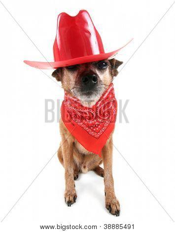 a cute chihuahua dressed up like a cowboy