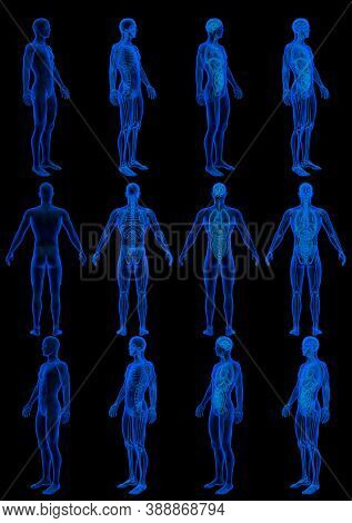 12 X-ray Hologram Renders Of Male Body With Skeleton And Internal Organs - Hospital Concept For Educ