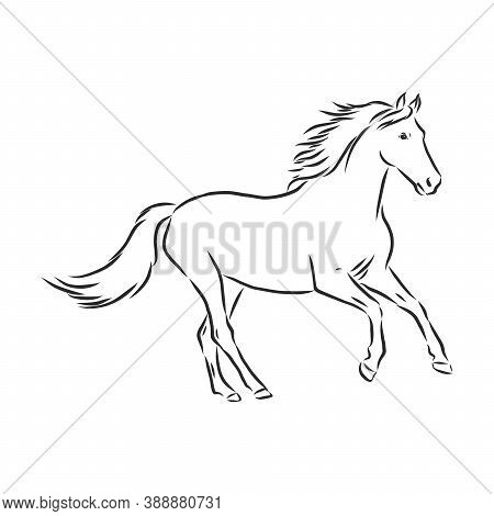 Horse Vector Illustration - Black And White Outline. Beautiful Horse, Horse Icon, Vector Sketch Illu