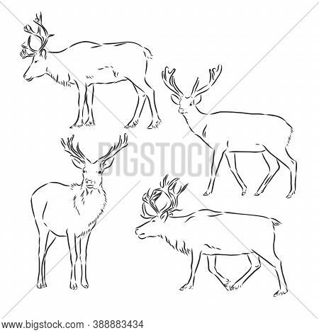 One Line Design Silhouette Of Deer.hand Drawn Minimalism Style.vector Illustration, Deer, Vector Ske