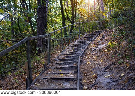 Path In Natural Parkland. Scenic Autumn Forest Road With Old Wooden Steps. The Path Goes Up The Moun