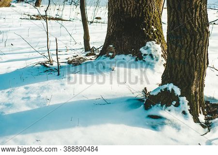 Shadows From Trees In The Snow In The Park