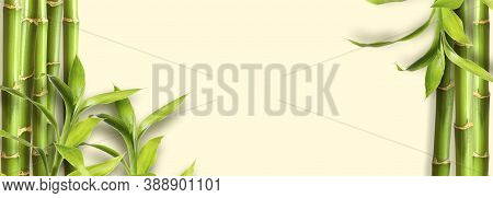 Green Bamboo Branches On Yellow Background Space For Text