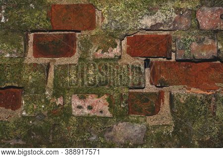 Old Brick Wall With Moss Close Up. Grunge Background