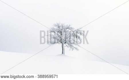 Minimalistic landscape with a lonely naked snowy tree in a winter field. Beautiful scene in cloudy and foggy weather. Christmas and winter holidays background
