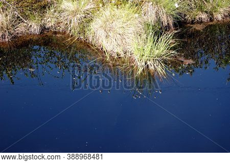 Swamp, Beautiful Reflection Of Grass, Refraction In The Water Of The Blue Sky