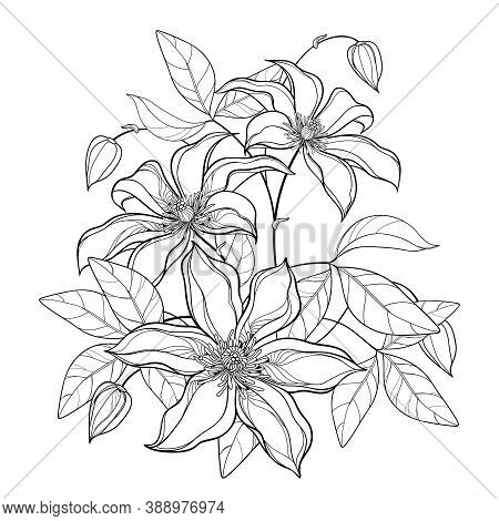 Vector Bouquet With Outline Clematis Or Traveller's Joy Ornate Flower Bunch, Bud And Leaves In Black