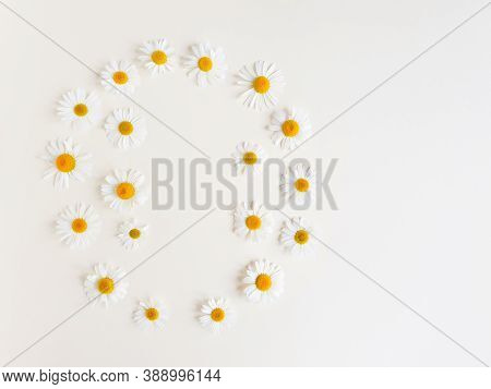 Round Flower Frame Or Border Of Camomiles On Light Ivory Background. Top View, Copy Space. Empty Spa