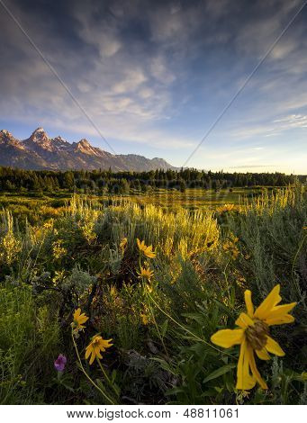 Wildflowers In The Tetons