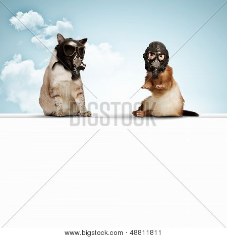 Cat and ferret in gas masks. Ecology concept poster