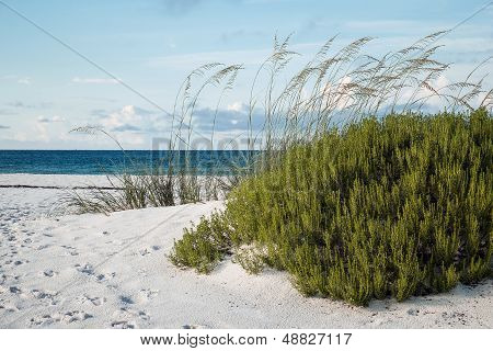 Early Morning Florida Beach And Dunes