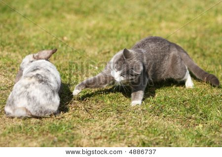 Cat Playing With A Rabbit