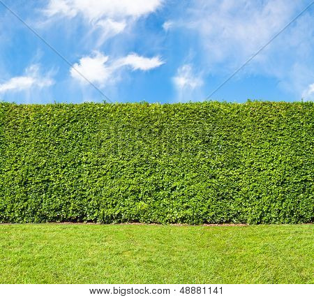Tall hedge endless seamless horizontal pattern with sky poster