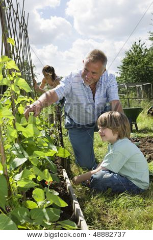 Happy boy with family gardening in allotment