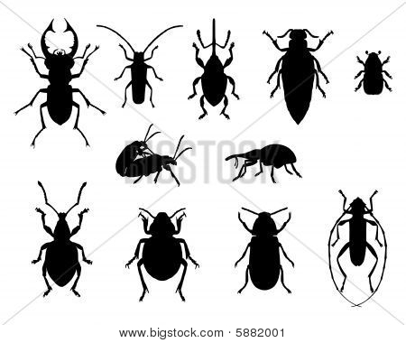 Black and accurate illustration of collection of beetles poster