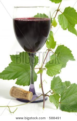 wine with grapevine poster