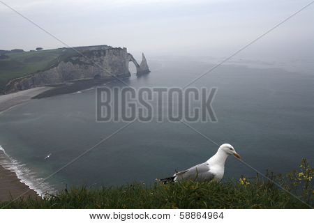 Etretat Seagull