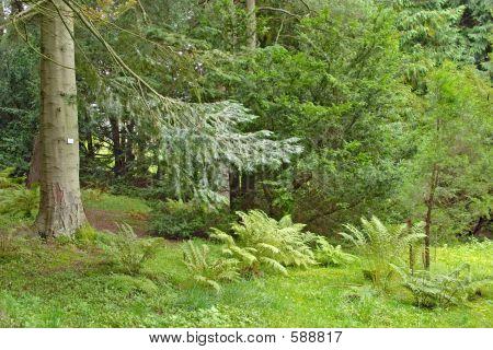 Lush Underbrush Wood