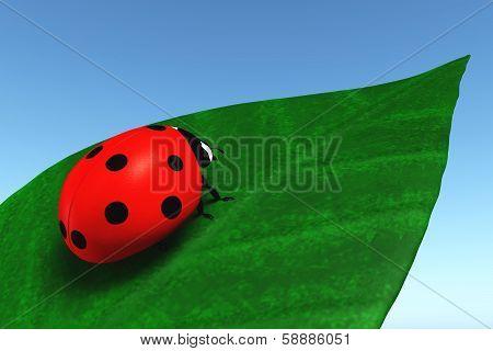 Ladybird On A Leaf