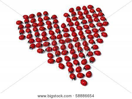 Ladybugs Form A Heart Shape