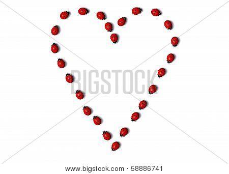 Row Of Ladybugs Forms A Heart Shape