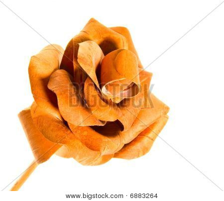 Rose From Wood Isolated On The White