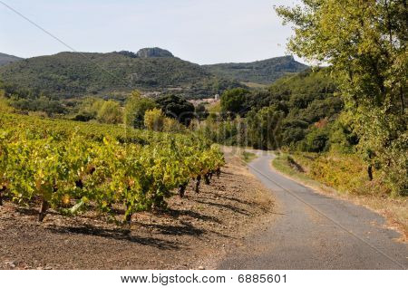 Country road in teh small vineyards of Provence in teh autumn