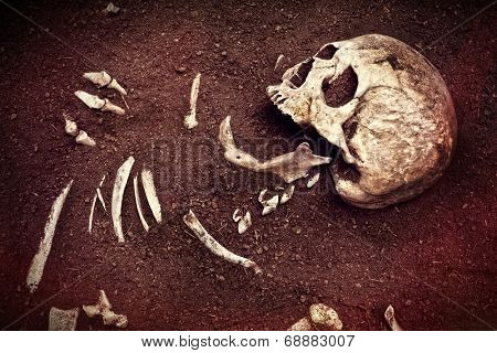 scene crime and buried bone