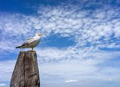White seagull sitting on wooden pillar against the blue sky and clouds poster
