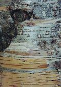 close-up of cedar bark pattern poster