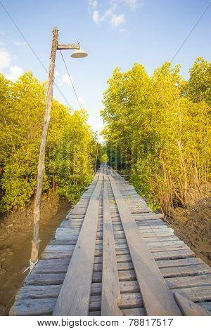 Path Through Mangrove Forest In The National Park Lanta Krabi Thailand