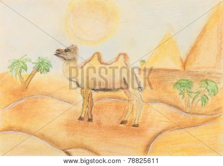 Bactrian Camel In Hot Desert