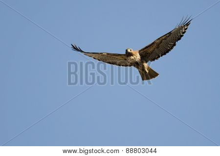 Red-tail Hawk Flying In A Blue Sky