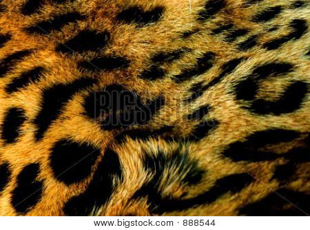 Wild Leopard Background Texture