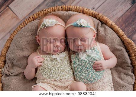Twin Baby Girls Sleeping In A Wicker Basket