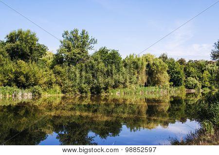 Mures river bank - summer