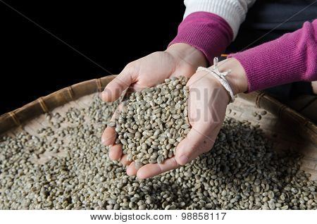 robusta green beans on hands