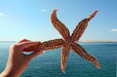 female hand holding a starfish against blue sky holiday feeling poster