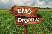 Gmo or Organic Farming Wooden Direction Sign in Agricultural Field poster