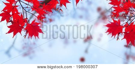 Fall red maple leaves on blue sky defocused background banner