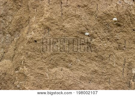 Soil Texture With A Snail Shell