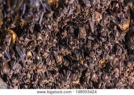Many bats hanging on the ceiling of the cave Pura Goa Lawah in Bali, Indonesia.