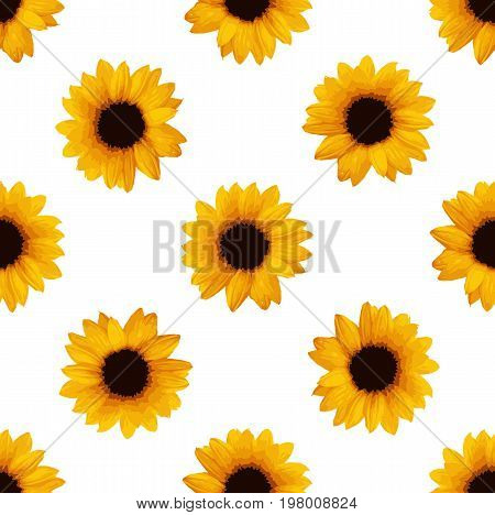 Sunflowers seamless pattern. Flower pattern. Vector stock.