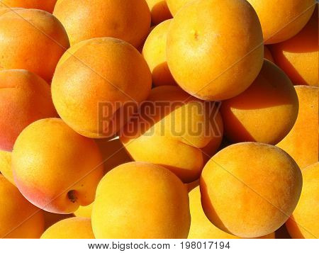 Apricots are orange colored fruits full of beta-carotene and fiber