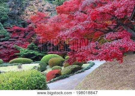 Japan Momiji