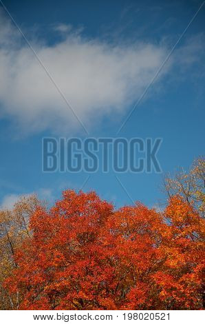 Red autumn leaves against blue sky background