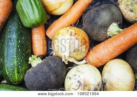 Closeup of freshly harvested vegetables turnips, beetroots, carrots, round marrow , top view