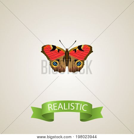 Realistic Precis Almana Element. Vector Illustration Of Realistic American Painted Lady Isolated On Clean Background