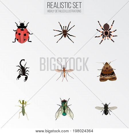Realistic Grasshopper, Gnat, Arachnid And Other Vector Elements